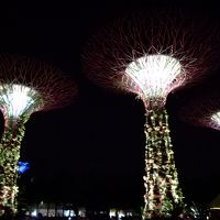 JALサファイアを目指して第三弾〜またまたシンガポールに行くのだ!�