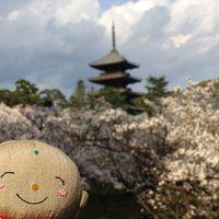 あっという間に過ぎていった2017京都の桜
