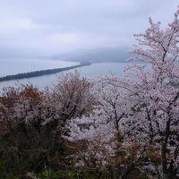 桜咲く天橋立へ【2】〜懐かしの天橋立を歩く〜