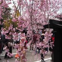 秋田/東北でよかった〜桜・菜の花ロードと千秋公園と角館で桜を愛でよう〜@ドーミーイン秋田(2017年4月)