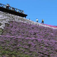 東京ドイツ村〜芝桜の見頃は過ぎてた!