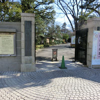 小石川後楽園で梅(2017年2月)
