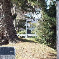 東海道を歩く 御油の松並木