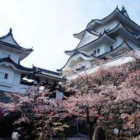 伊賀上野城の花見と金谷で伊賀牛のバター焼きを食す旅