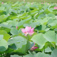 GWは台湾南部 關仔嶺温泉に泊まって蛍ツアーへ