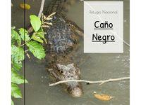 コスタリカ旅行 Day6 カーニョ・ネグロ野生保護区
