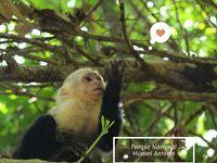 コスタリカ旅行 Day9 マヌエル・アントニオの動物はガイドなしでも見つけやすい