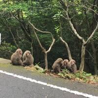 屋久島旅行3泊4日+α 素晴らしい自然、食、そして人〔その4:5/5屋久島1周ドライブ後に帰阪・・・のはずが・・・・〕(2017年GW)