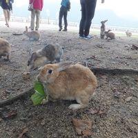 2016 広島アウェイは大久野島と尾道散策【その3】大久野島で朝の散歩