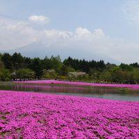 芝桜と富士山を見るために