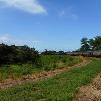 ケアンズ旅行4日目 いざ熱帯雨林へ!キュランダ&パロネラパーク〜3世代旅行♪