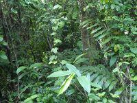 自然満喫のマレーシア  2.タマンネガラのジャングル
