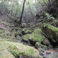 屋久島2017‐� 白谷雲水峡へ