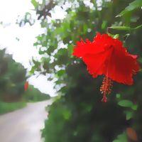 JTA創立50周年記念ウルトラ先得で石垣島へ1*・゜・*梅雨真っ只中 石垣島ごはん*・゜・*