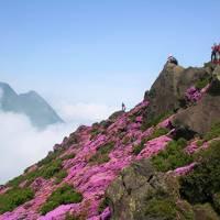 天空に咲くピンクの大花園を訪ねて( 九重連山に咲くミヤマキリシマ 前編 )