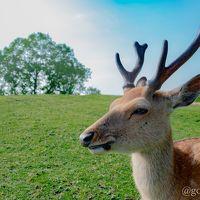 奈良お散歩旅