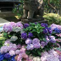 文京区あじさいまつり 2017