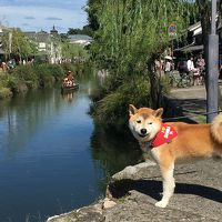 2016秋 岡山・姫路旅行2:倉敷美観地区の古民家に泊まってデニム食(≧∇≦)満喫