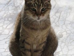 猫探し【トルコの猫(Cats in Turkey)編】