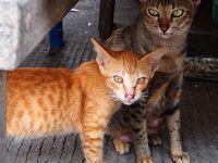 碧い海と南の島に住む猫たちを巡る旅 in Samui★2017 07 7日目 【サムイ島】