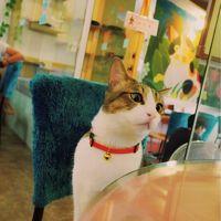 今年は楽しめた♪台湾オフ 〜ごちそうと猫カフェで至福の三連休〜