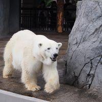 母娘で初めて行く夏の北海道旅行 [1日目] 旭山動物園、旭川泊