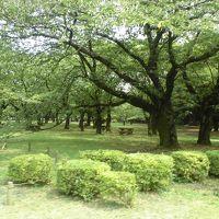 代々木公園を歩きました。