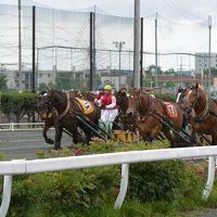馬たちを眺め、ワインと食を楽しむ旅〜日高・十勝2泊3日〜その1