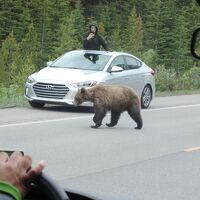 カナダ3の2 『目に青葉、熊・鹿・氷河だ、バンフッフ』