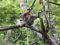 都会のジャングルとボルネオのジャングルの比較旅