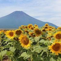 箱根から花の都公園へ
