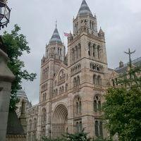 猛暑の日本よ、さようなら 行くぞロンドン!大英帝国のロマンに触れる旅  自然史博物館〜V&A博物館〜ハロッズ〜コヴェントガーデン�