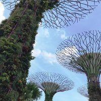 子連れ旅行 シンガポール その3 ガーデンズ バイ ザ ベイとカトン地区に行きたいのー。そして帰国