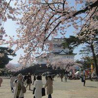 2歳半と行く桜満開の小田原&箱根湯本