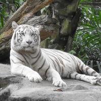 リベンジ!! シンガポール その2  シンガポール動物園で癒される