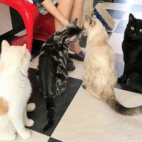 麗しきアール・ヌーヴォー「ミュシャ展」と猫カフェ「まるまり」♪グランマーブル工場cafeでブランチを♪