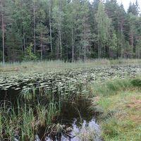母娘で初めてのフィンランド!part2