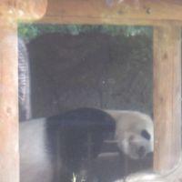 ☆今日はただだからっ!☆ 童心に帰って上野動物園へ