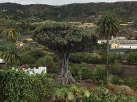 (ひとり旅)テネリフェのパワースポット?800年以上生きている木に会いに行きました!(1)