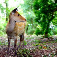 奈良、若草山、鹿との触れ合いピンポイント旅