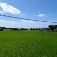 新潟 〜島旅で行く 佐渡島 Vol.3 たらい舟と宿根木、回転ずしで満腹編〜