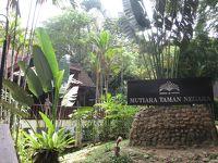 世界最古の熱帯雨林・タマンネガラ国立公園7日間 〜どうでしょう藩士の一人旅�〜
