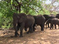 ジャカランダの花咲く頃〜南部アフリカ4か国10日間  6.チョベ国立公園