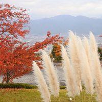フルーツの丘の紅葉がいい感じ(10月31日・2-2)