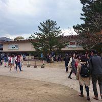 秋の奈良〜正倉院展、その後社会人野球観戦