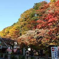 高尾山で半歩先に紅葉を楽しんできたお話【1】