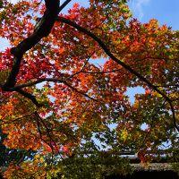 西国街道から京都嵐山とグルメ・カフェ少々の旅(二日目)〜嵯峨御所とも呼ばれた大覚寺で南北朝時代にまで思いを馳せた後は嵯峨野のプチ紅葉狩り。後半のイクスカフェ嵐山本店とうめぞのはちょっと余計。イカリヤ食堂への流れがチグハグでした〜