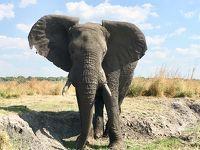 南アフリカ ザンビア ジンバブエ ボツワナ �