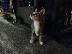 ランカウイ カジュアル(ビンボ)ツアー /チェナン/ねこ歩き♪