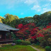 そうだ【今年こそ!】京都、行こう。 第2弾 ☆やっぱり京都の紅葉は特別感が漂う?!